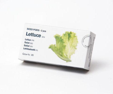 Tregren Lettuce